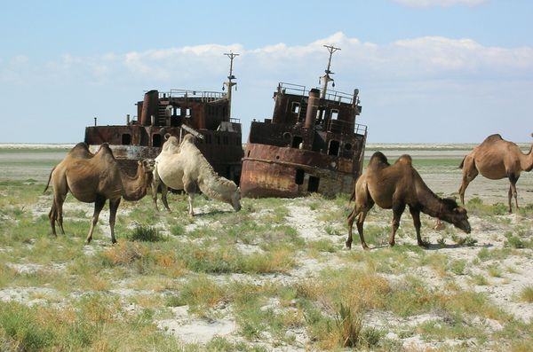 aral_sea_ship_camel.jpg